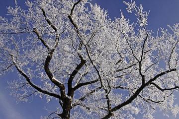 Baum mit Rauhreif im Winter, Deutschland - Tree with hoarfrost