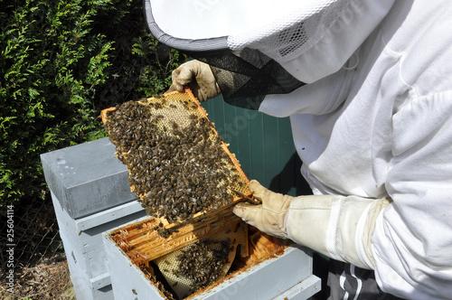 Une ruche en pleine forme pour cet apiculteur