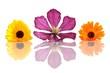 Ringelblumen und Clematisblüte