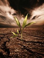 Green plant growing through dead soil
