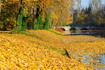 autumn in warsaw public garden