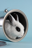 rabbit in a paint bucket