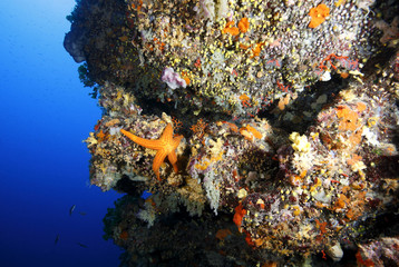 stella marina acquario