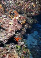 stella marina rossa acquario