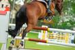 Pferde 119.1