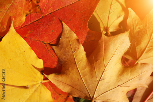Red and yellow fallen autumn leaves background