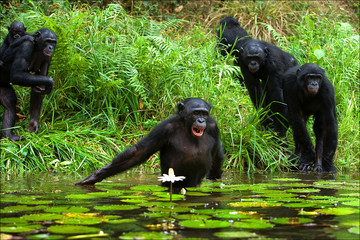 The chimpanzee collects flowers. 3