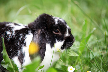 Cute rabbit resting in the grass