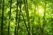 Fototapeten,asien,hintergrund,bambus,balken