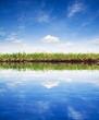 Grass reflection