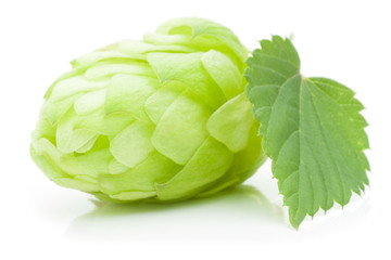 Close up view of single hop cone with leaf. Isolated on white.