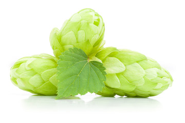Close up view of fresh hop cones with leaf. Isolated on white.