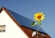 Sonnenblume vor Solarzellen auf Hausdach