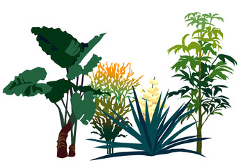 熱帯の植物セット