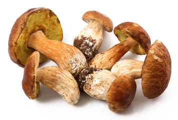 funghi porcini freschi in fondo bianco