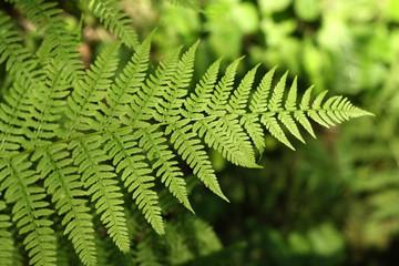 A leaf of fern