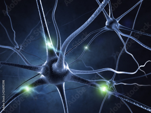 active nerve cell in human neural system