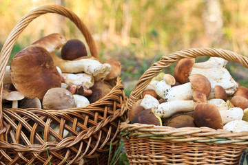 basket with porcini mushrooms
