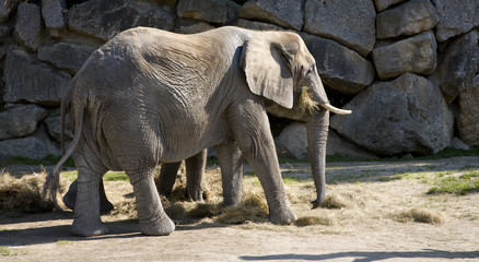 elephanfs from Vienna zoo
