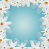 Fototapety White daisy beautiful frame on blue background