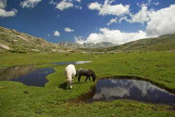 Corsica: cavalli al pascolo sul lago di Nino 4