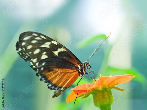 A beautiful butterfly rests on a flower