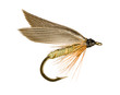 Grey Winged Olive Wet Trout Fishing Fly Isolated on White
