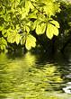 Leinwanddruck Bild - Feuilles de marronnier et reflets dans l'eau