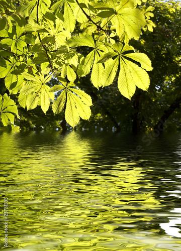 Leinwanddruck Bild Feuilles de marronnier et reflets dans l'eau