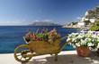 Fiori sul mediterraneo