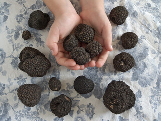 showing truffles