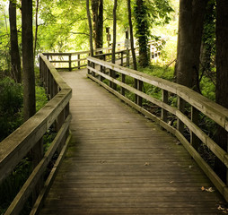 Wooden Boardwalk In Forest