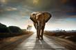Fototapeten,elefant,landschaft,säugetier,straßen