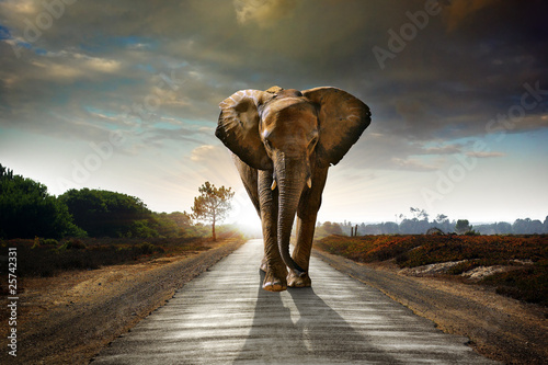 Poster Walking Elephant
