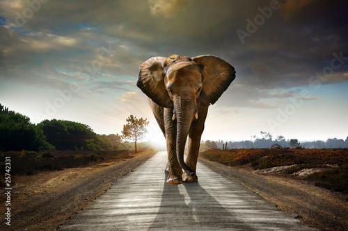 Aluminium Meest verkochte foto's Walking Elephant
