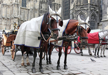 Traditional horse coach Fiaker in Vienna Austria
