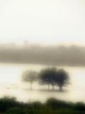 Fototapeta woda - tama - Jezioro / Staw