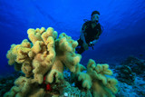 Scuba Diving on a Coral Reef poster