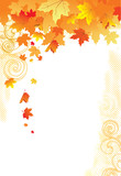 Fototapety Autumn Background /  gold leaves on white background