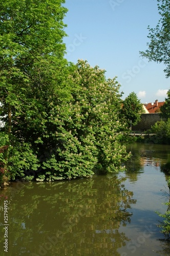 blossoming chestnut tree on a river