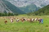 Bauern in den Bergen beim Almabrieb
