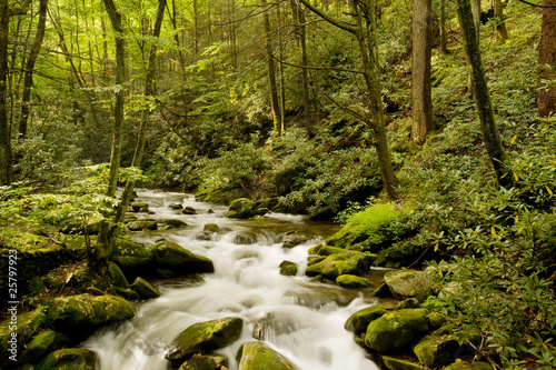 Mountain stream in Great Smoky Mountains