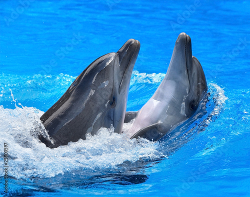Papiers peints Dauphin Couple of dolphin in blue water.