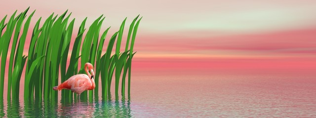 Flamingo and waterplants by sunset