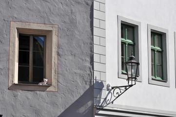 meissen, finestre con finto gatto nel centro storico
