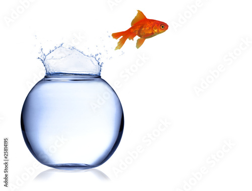 Gold fish jumping off aquarium
