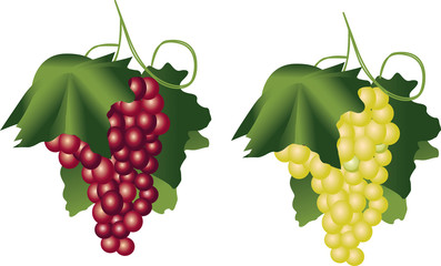 Iillustration of the Red and green vine