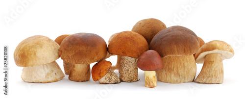 Leinwanddruck Bild Mushrooms