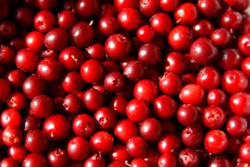 Fresh Cowberry (Vaccinium vitis-idaea)