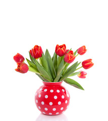 red tulips with yellow edges in a dotted flower vase isolated ov